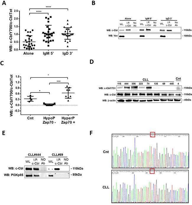 Analysis of c-Cbl phosphorylation and its association with PI3K regulatory subunit p85.