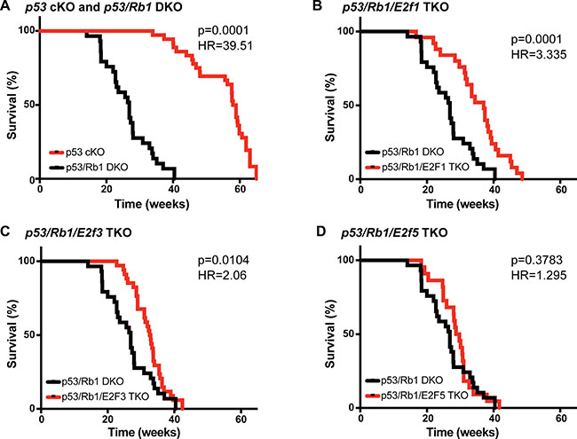 Loss of E2f1 or E2f3 increases survival in osteosarcomas bearing Rb1 mutations.