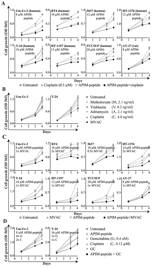 APIM-peptide in combination with clinically relevant cisplatin-containing combinations inhibits cell growth in vitro.