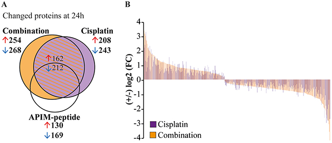 APIM-peptide enhances protein changes induced by cisplatin.
