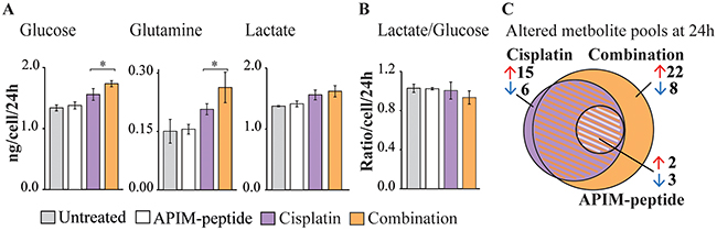 APIM-peptide-cisplatin combination increases energy source consumption and affects central carbon metabolism.