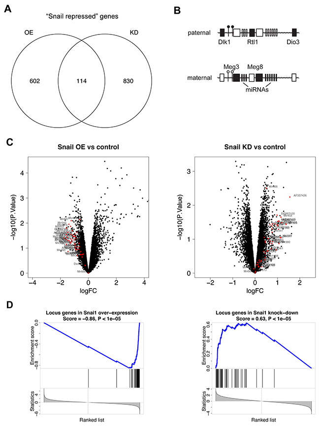 Snail represses the Dlk1-Dio3 locus in Kras-driven lung adenocarcinomas.