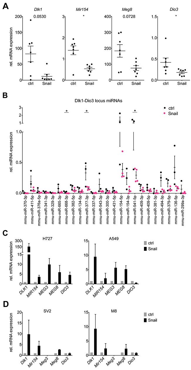 Snail represses Dlk1-Dio3 locus genes and mature miRNAs in KP lung tumors.