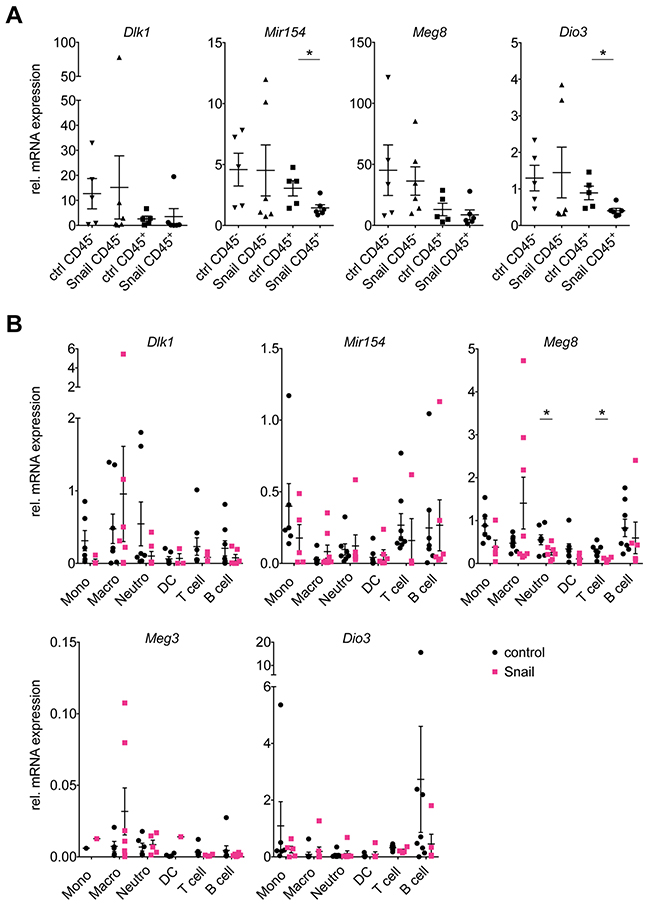 Snail represses the Dlk1-Dio3 locus in lung tumor infiltrating immune cells.
