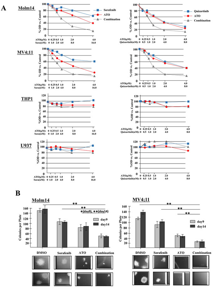 ATO synergizes with FLT3 TKIs to reduce proliferation and clonogenicity of FLT3/ITD+ cell lines.