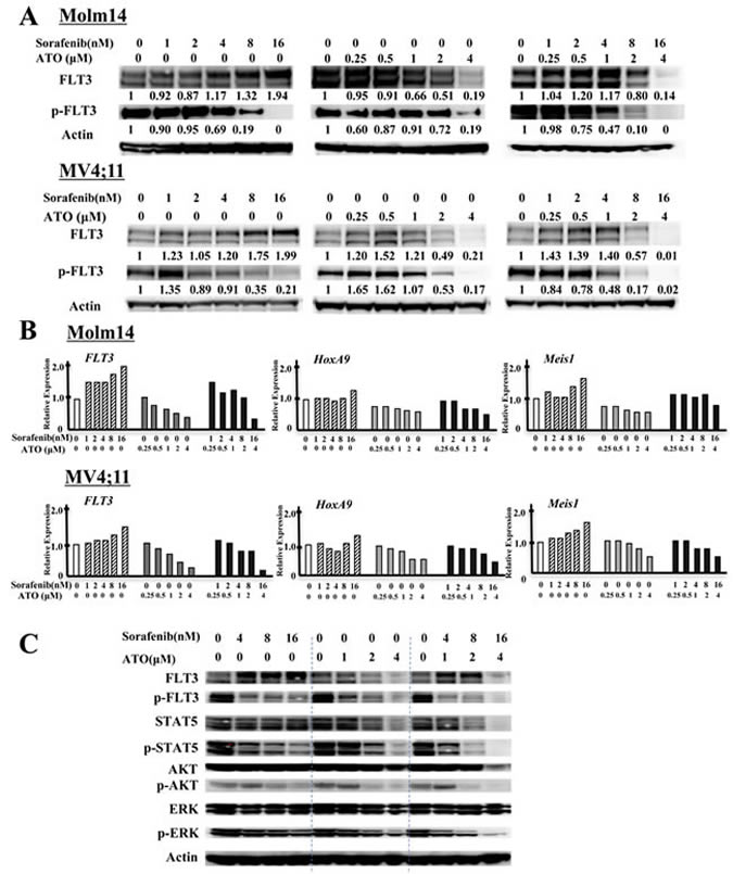 ATO decreases protein levels of FLT3 and shows potent inactivation of FLT3 and its downstream signals in combination with FLT3 TKI.
