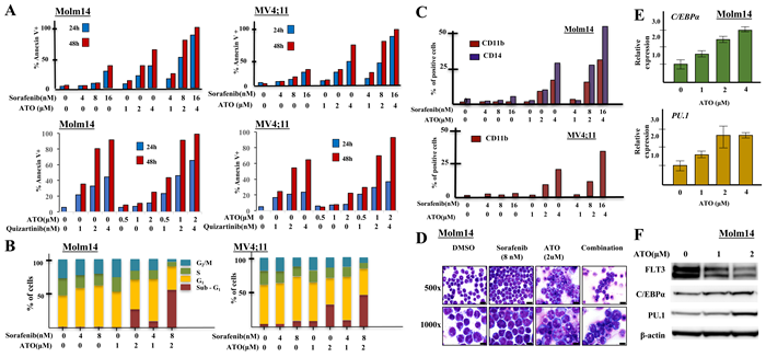 Combining sorafenib with ATO induces strong apoptosis, cell cycle arrest and differentiation in FLT3/ITD+ cell lines.