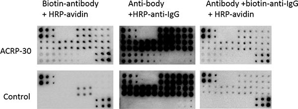 RPPA detection system tested with different antibody labeling options.
