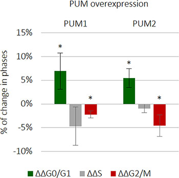 PUM1 and PUM2 slightly downregulate TCam-2 cell cycle progression.