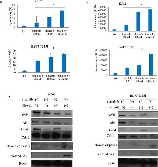 ABL TKIs combined with alisertib induces cytotoxicity in Ph+ cells.