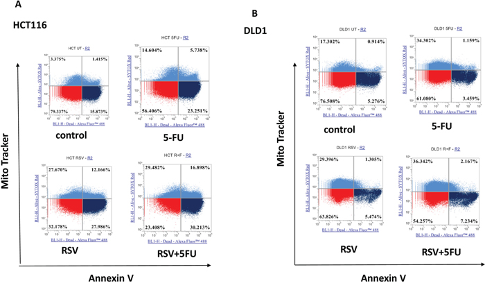 Effects of combination treatments with resveratrol and 5-FU on apoptosis of colorectal cancer cell lines.