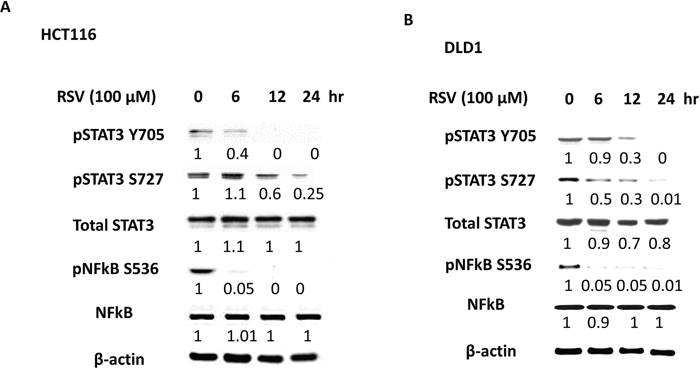 Anti-inflammatory effects of resveratrol with pSTAT3 and pNFkB inhibition.