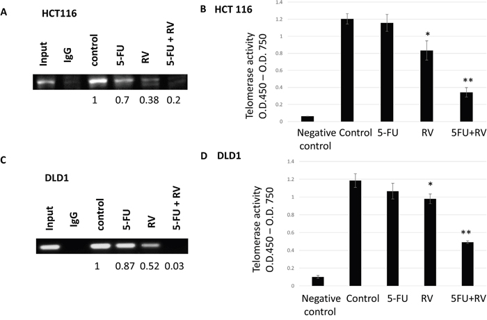 STAT3 binding to promoter region hTERT were inhibited by the resveratrol and 5-FU alone and in combination and corresponding telomerase activities were decreased upon the combination treatments.