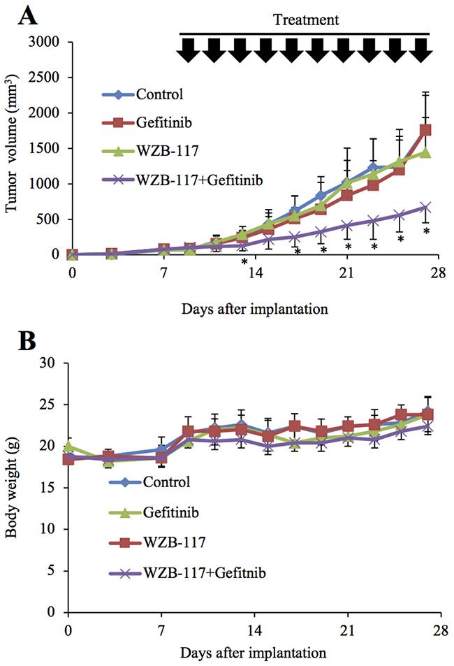 GLUT1 inhibition augments the anti-tumor effect of gefitinib in vivo.