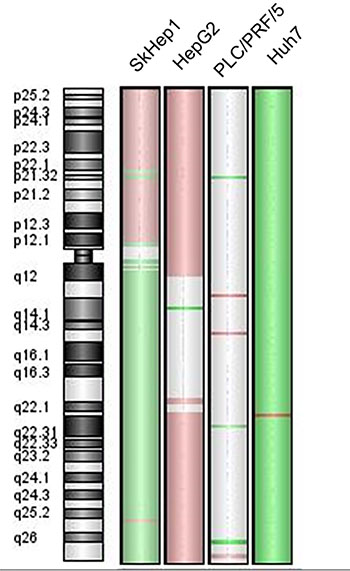 Chromosome 6 genomic profile of the cell-lines SkHep1, HepG2, PLC/PRF/5 and Huh7.