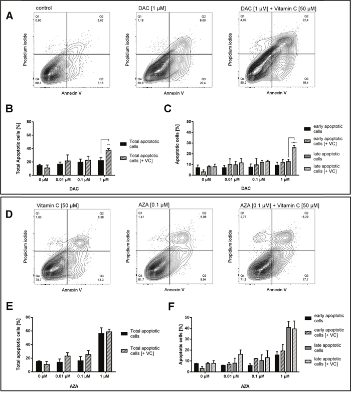 Increase of apoptotic cells in human colon cancer cells by vitamin C and DAC/AZA incubation.