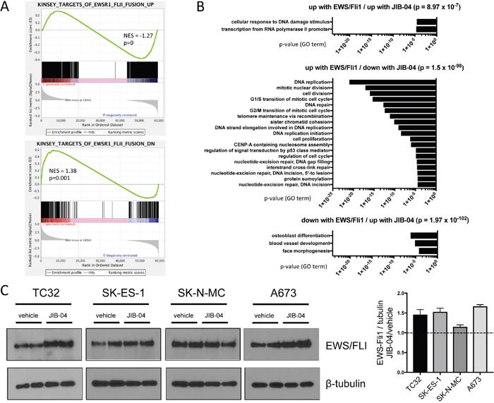 Effects of JIB-04 treatment on EWS/Fli1 expression signature and EWS/Fli1 protein levels.