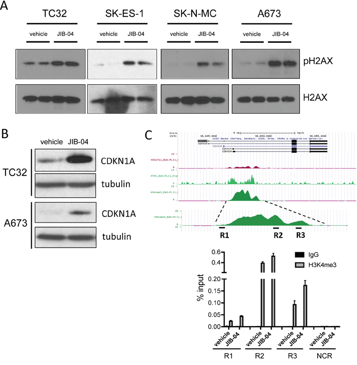 Effects of JIB-04 on DNA damage and CDKN1A expression.
