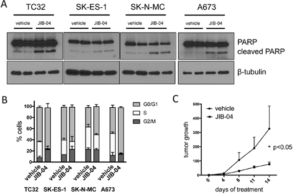 JIB-04 inhibits cell survival and cell cycle progression, and attenuates tumor growth in vivo.