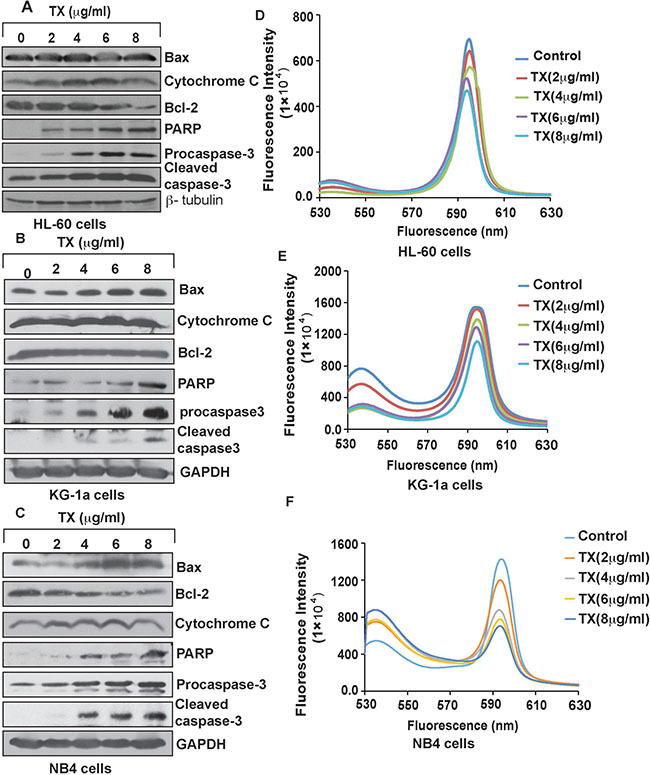 TX induces intrinsic pathway of apoptosis.