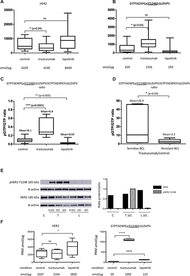 Expression of HER2 peptides on the five BCLs (BT474, SKBR3, SUM190, SUM225 and ZR75-30) in control (C) condition and under trastuzumab (T) or lapatinib (L) treatment.