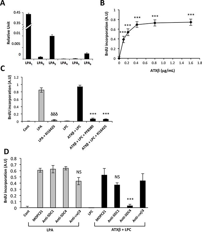 Blocking SDC4 inhibits ATXβ-induced cell proliferation.