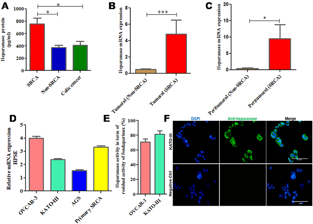 mRNA and protein expression of heparanase in clinical samples and cell lines including KATO-III.