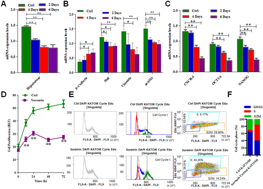 mRNA expression of EMT markers, stem cell markers as well as cell cycle arrest and cell proliferation in KATO-III after treatment with suramin.