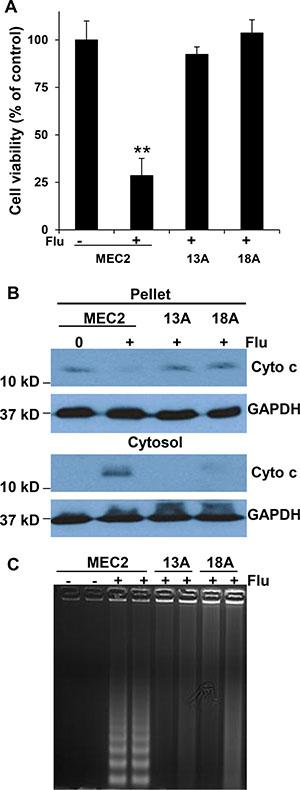 Flu induces MEC-2 cell apoptosis but not flu-resistant clonal cells.