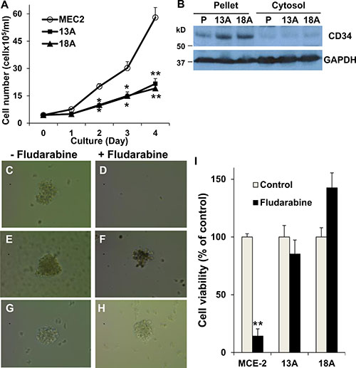 Characterization of LSC property in flu-resistant clones.