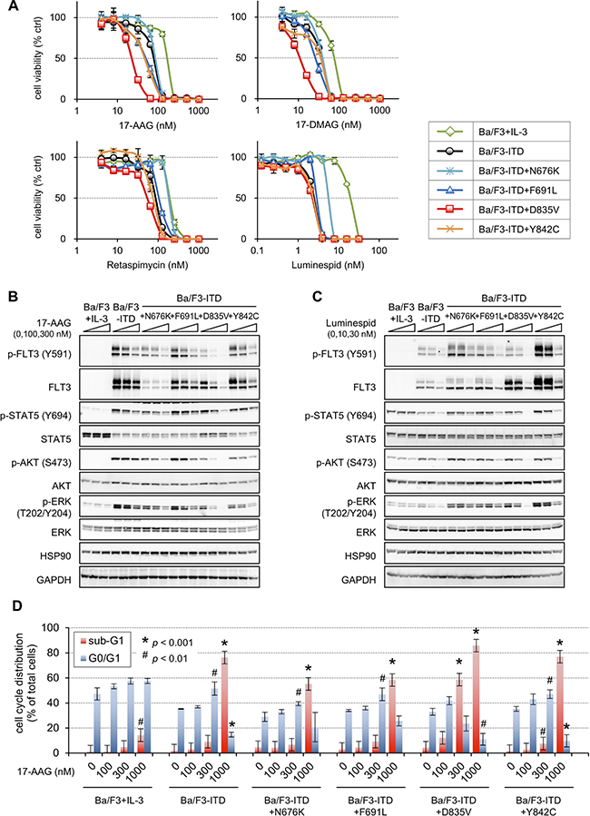 Sensitivities to HSP90 inhibitors in the FLT3-ITD and TKD mutant transfectants.