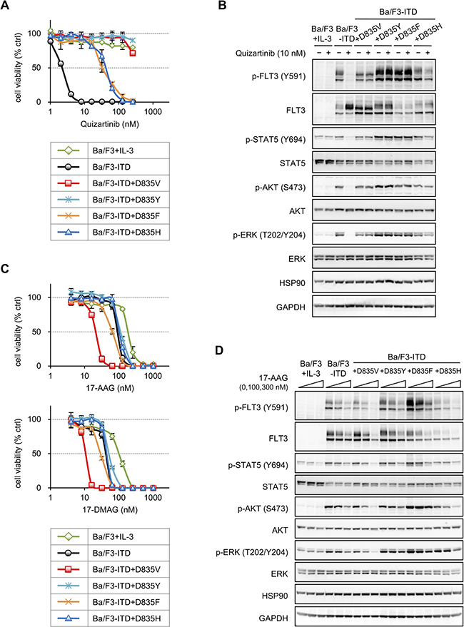 Sensitivities to HSP90 inhibitors in Ba/F3 cells expressing various amino acid substitutions of D835 on FLT3-ITD.