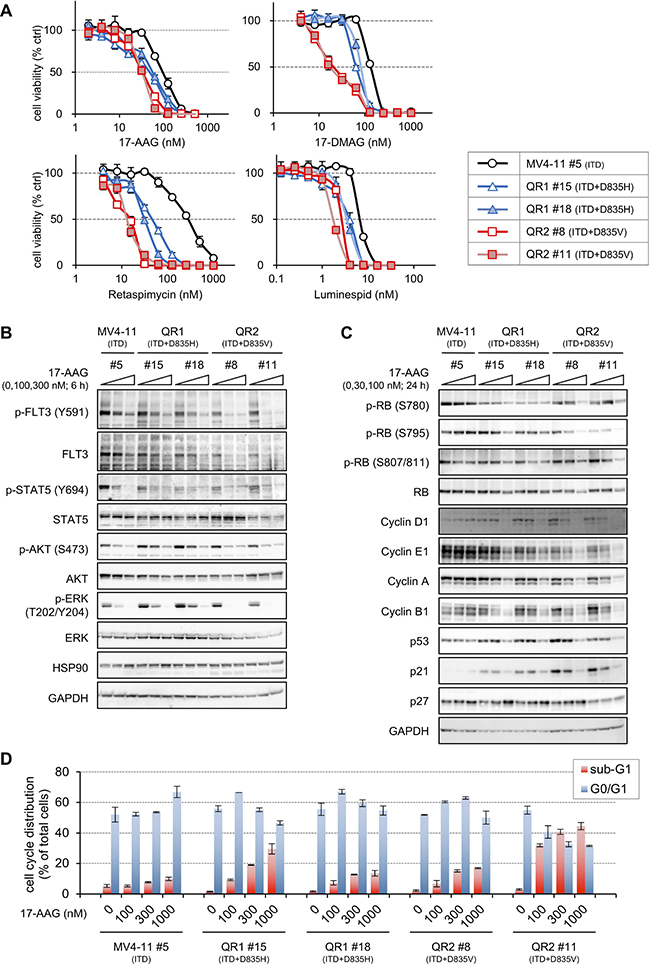 Sensitivities to 17-AAG in QR1 and QR2 cells.