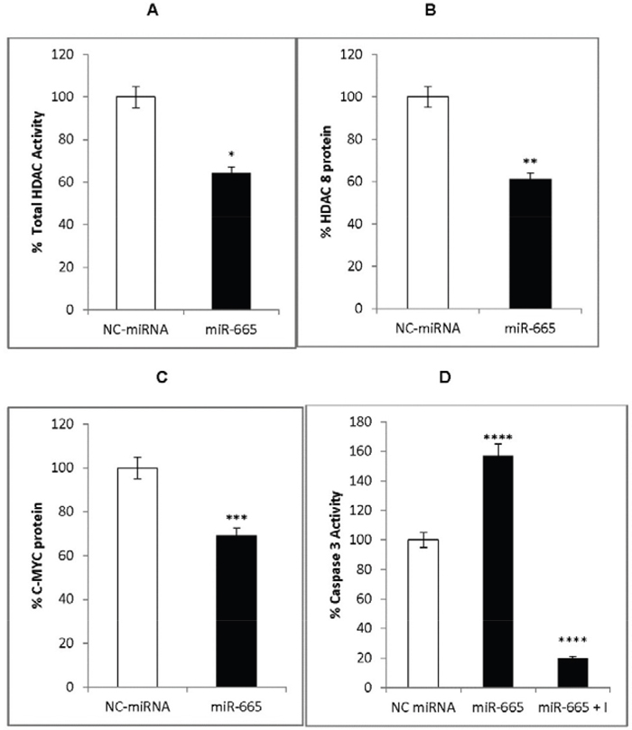 miR-665 effects on HDAC8 and c-MYC expression.