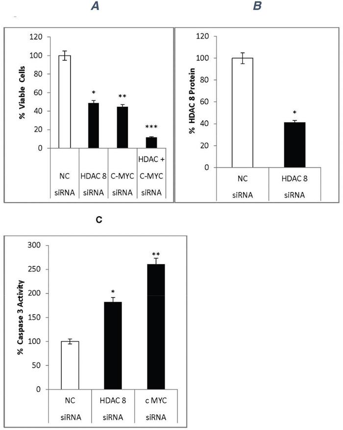 siRNA effects on neuroblastoma cells.
