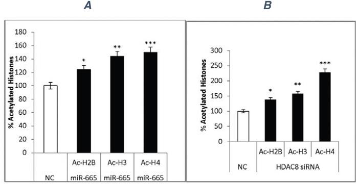 Histone acetylation.