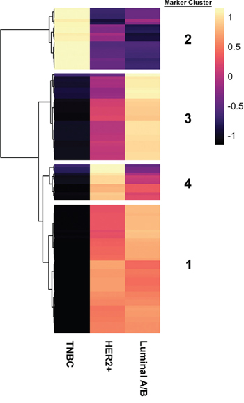 Four distinct marker clusters can be stratified from three putative breast cancer subtypes.