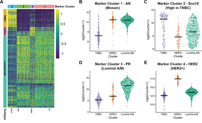 Identification of gene markers for HER2+, Luminal A/B and TNBC.
