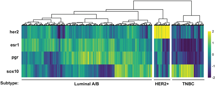 SOX10 expression can be used to independently define a TNBC subtype.