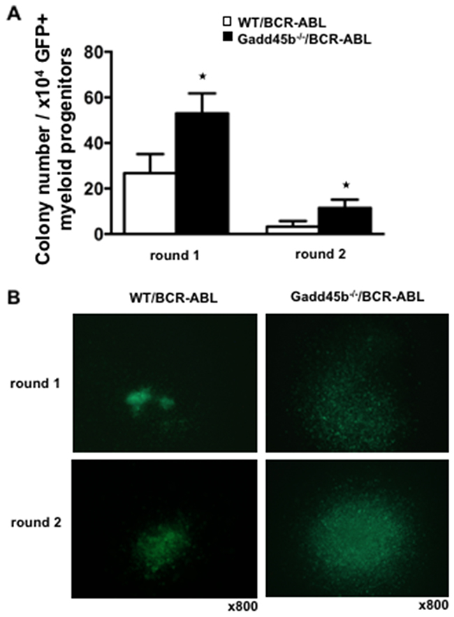 Loss of Gadd45b increased colony forming units (CFU) in vitro.