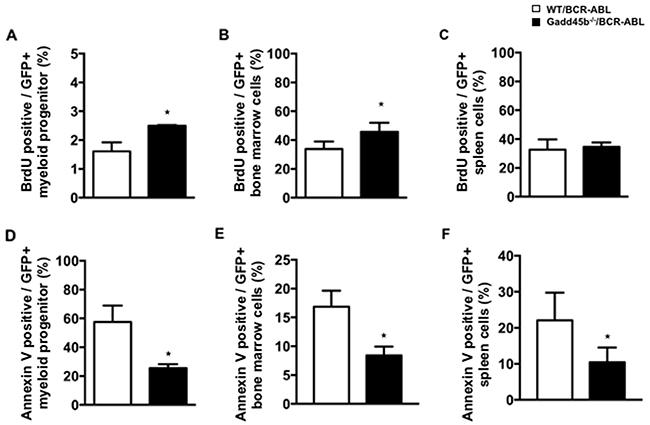 Loss of Gadd45b reduced apoptosis of myeloid progenitors in Gadd45b-/-/BCR-ABL recipients.