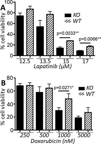 capns1 KO correlates with enhanced sensitivity to lapatinib and doxorubicin.