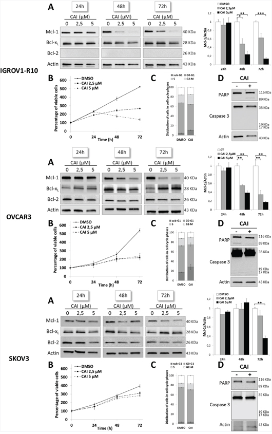 CAI inhibits Mcl-1 protein expression and has an anti-proliferative effect on three ovarian cell lines.