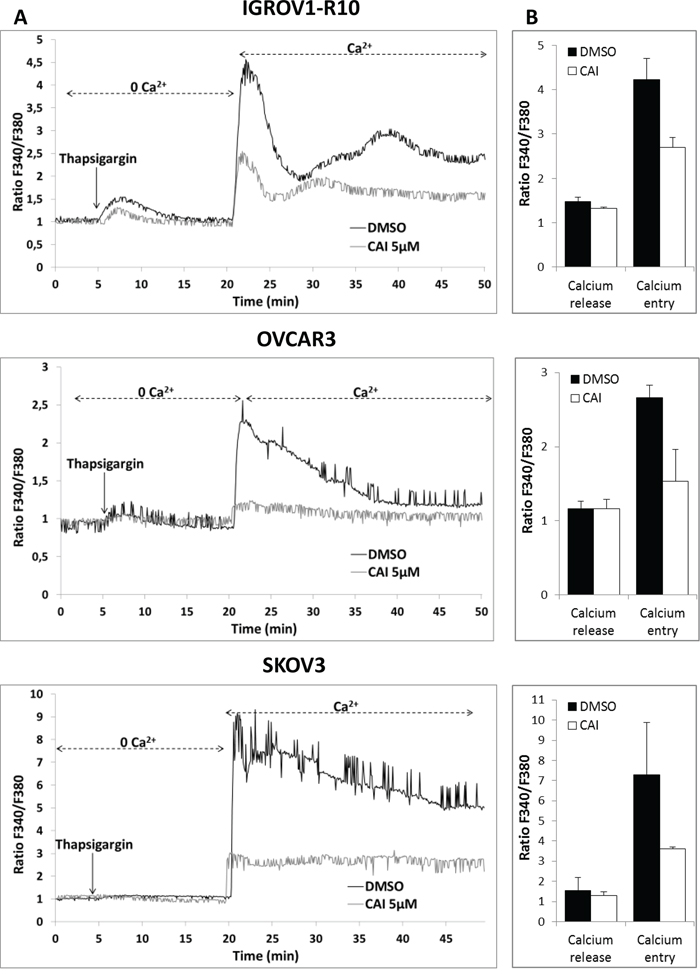 CAI does not block IP3R calcium release but inhibits SOCE.