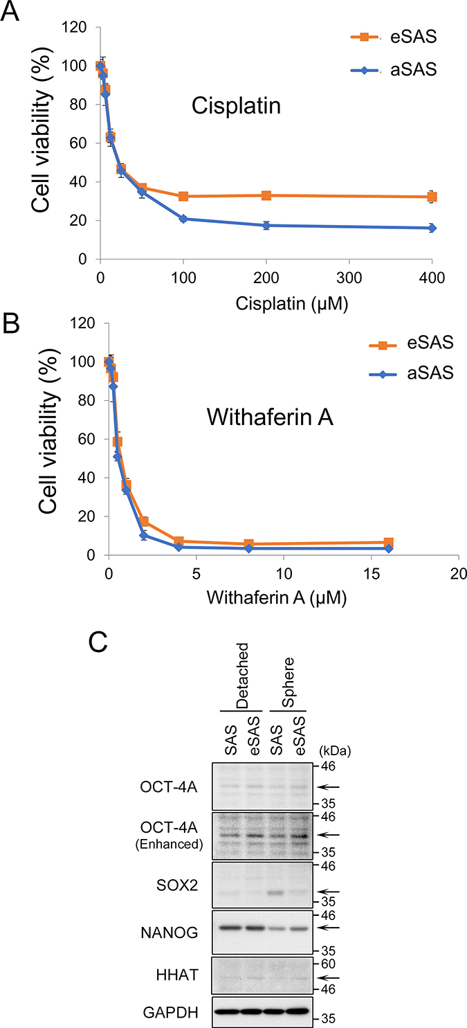 eSAS cells are more resistant to cisplatin than aSAS cells but not to WA.