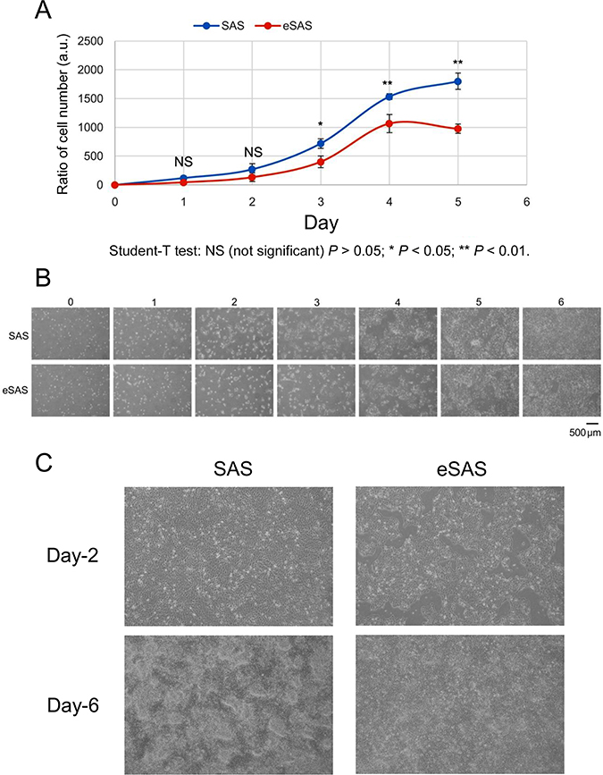 Growth of eSAS cells is slower than that of SAS cells.