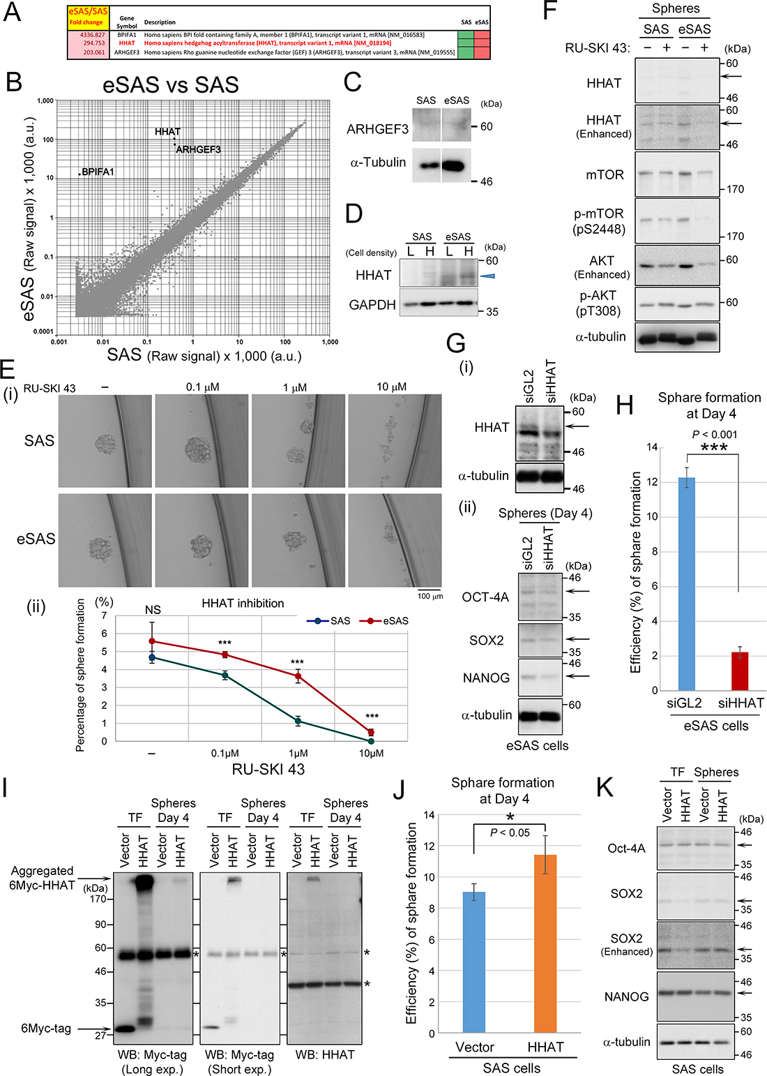 Genome-wide cDNA microarray and Wb analyses of HHAT expression in eSAS cells.