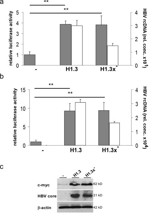 Tcf/LEF dependent β-catenin-signalling in HBV-replicating hepatoma cells.