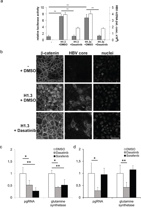 Tcf/LEF dependent β-catenin-signalling and target gene expression in hepatoma cells.