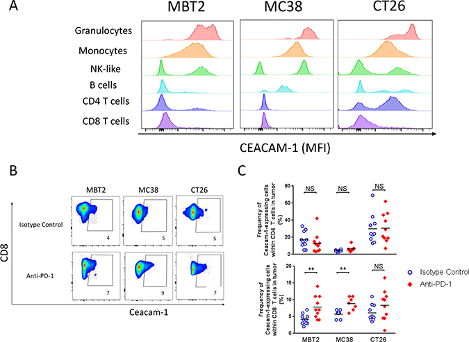 CEACAM1 expression on tumor-infiltrates within mouse syngeneic tumors in the presence or absence of anti-PD-1.